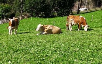 Animals & farm